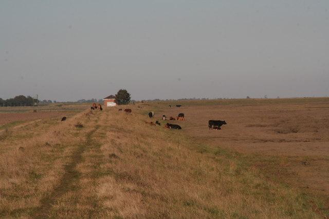 Grassland between the sea banks