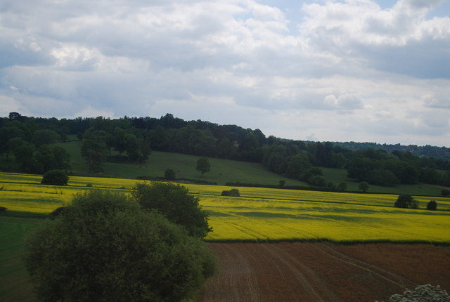 Oil Seed Rape, Rother Valley