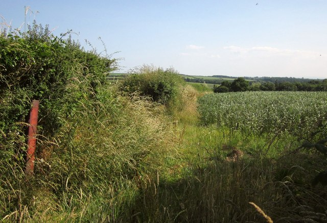 Field boundary near Dart Raffe Farm