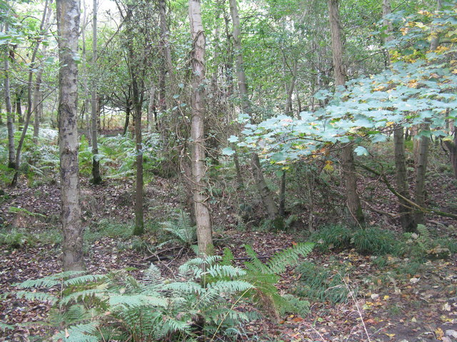 Oakenhill Wood, Parkend