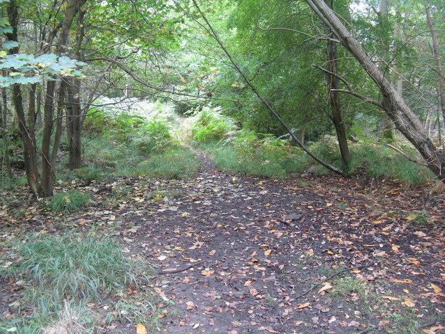 Path in Oakenhill Wood