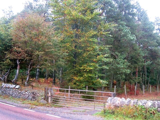 Woodland north of Ladybank
