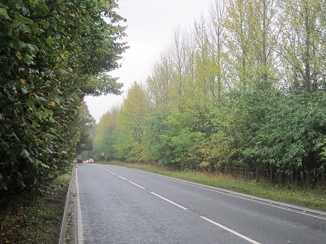 Trees beside the A91