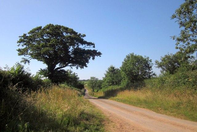 Lane to Doorpark Farm