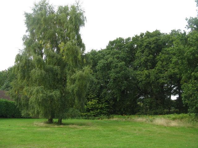 Oldcroft Plantation