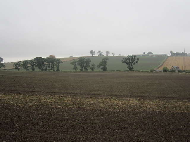 Winter crops, Westhall