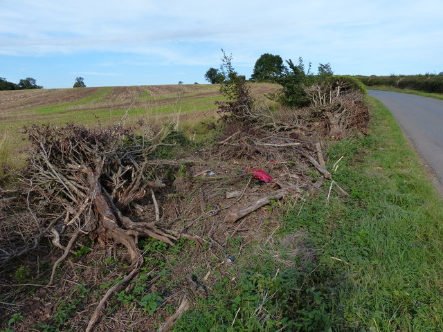Damaged hedge along Kegworth Lane
