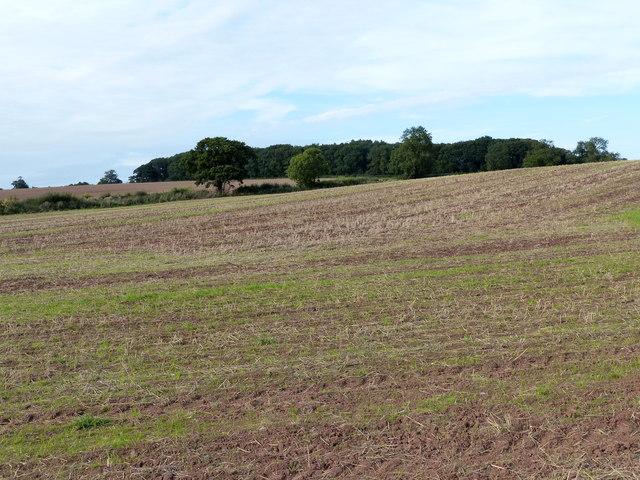 Farmland north of Long Whatton