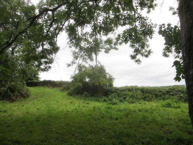 Rough grazing beside the West Mendip Way