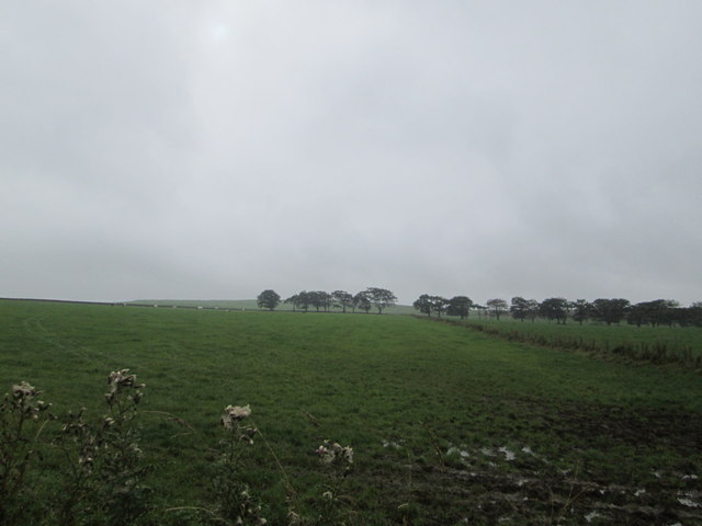 Rough grazing lands at Swaites Farm