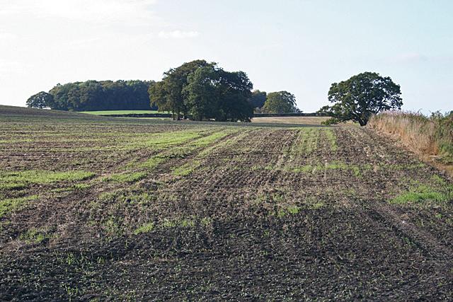 Fields at Old Glendevon Farm