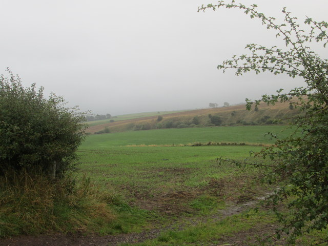 Grasslands near the haugh in the Clyde Valley
