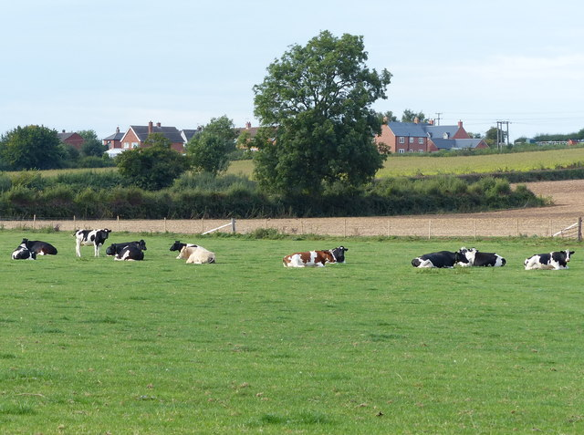 Cattle pasture near Diseworth
