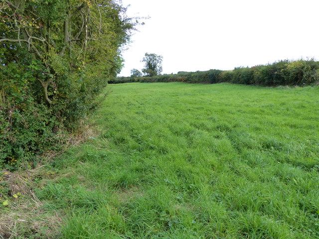 Field alongside Diseworth Brook