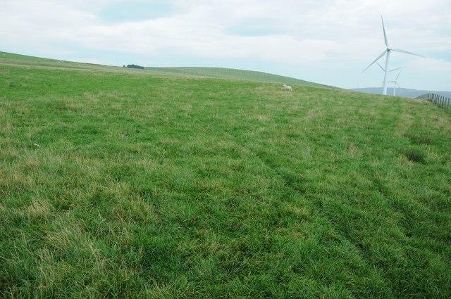Grassland beside Mynydd Clogau windfarm