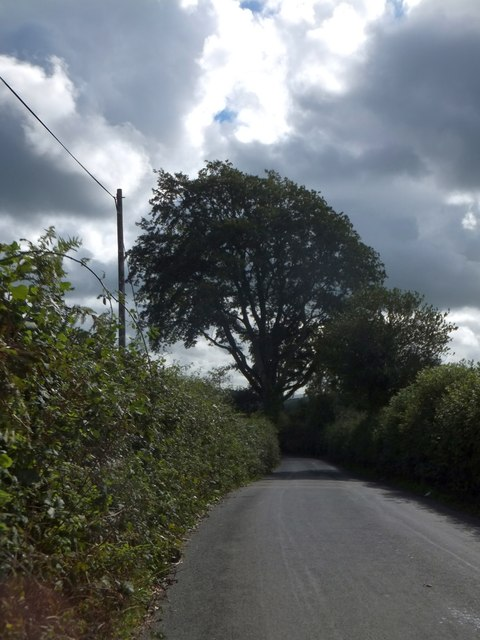 Solitary tree by the road near Wickeridge