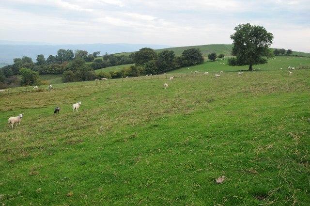 Farmland above Alltwnnog