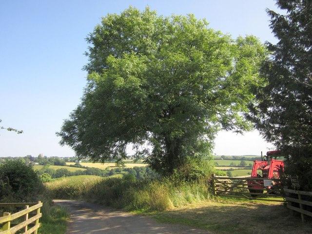 Lane past Dart Raffe Farm