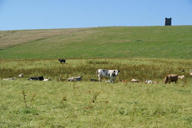Cattle near Brockan