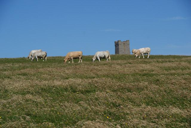 Cattle above Choldertoo