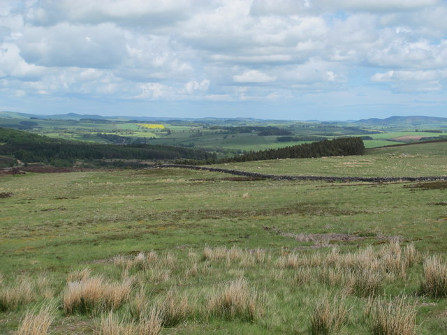 Daw's Moss and plantation above Holystone Burn