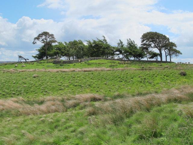Small plantation south of Pedlar's Stone