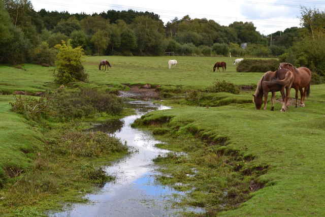 Stream and ponies at Dibden Bottom