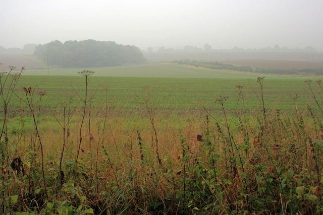 Looking Towards Hergill Plantation