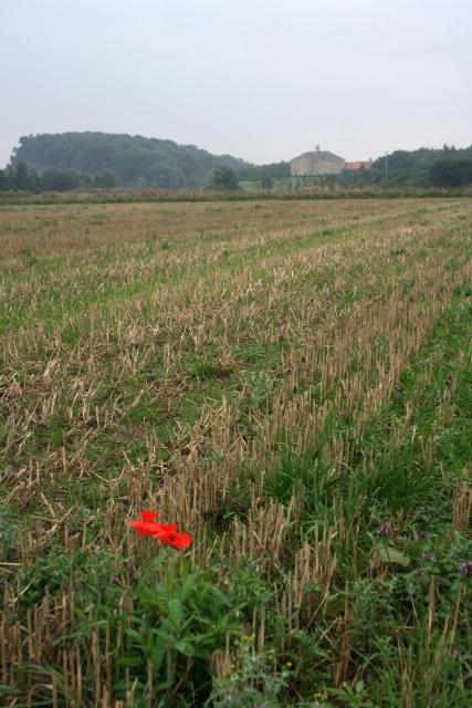 Stubble Field near Aldbrough St. John