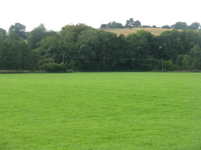 Pasture at Blakeney