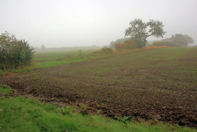 Corner of Field
