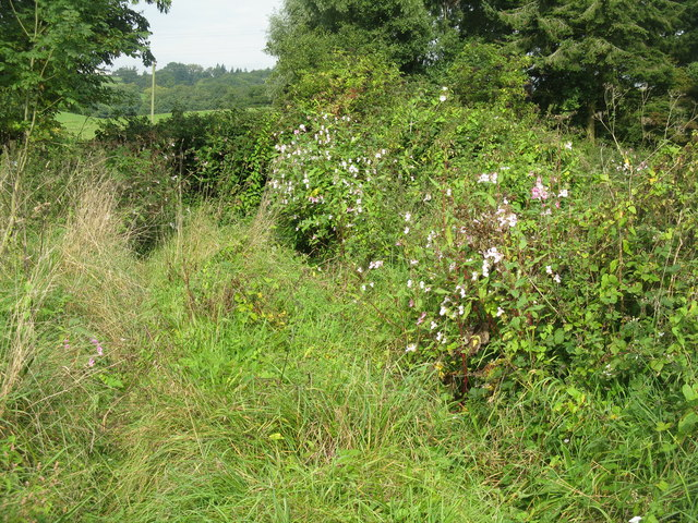 Overgrown footpath at Poulton Farm