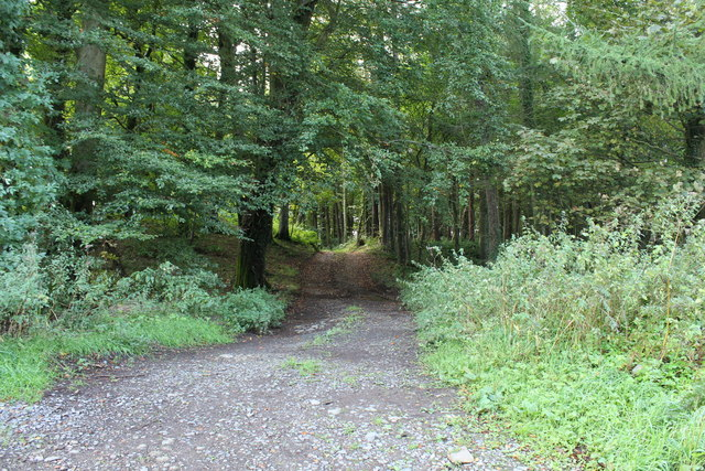 Forest Track near Lime Kiln