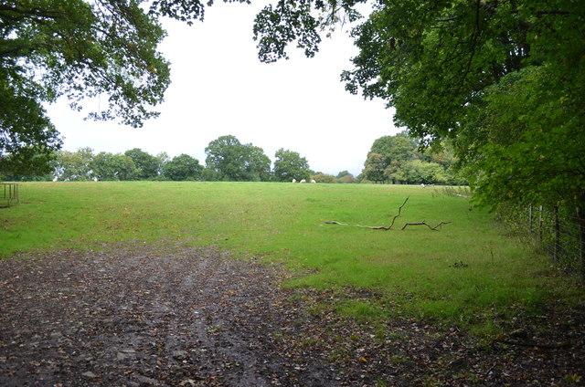 Field off Partridges Lane(2)
