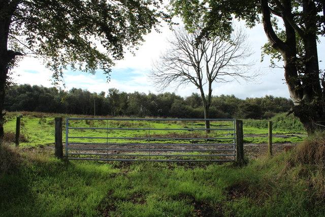 Farmland near Folly Wood