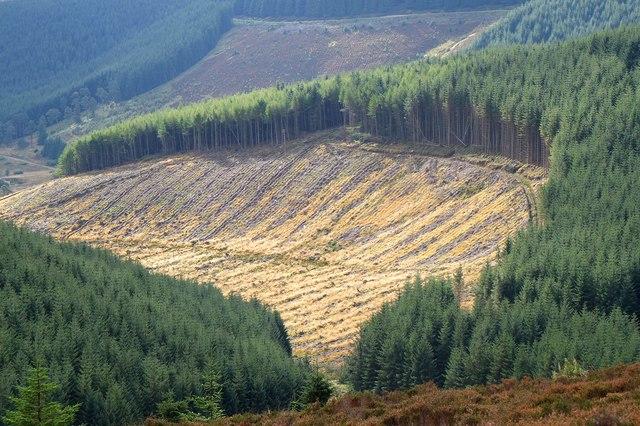 Plantation on Minchmoor Rig