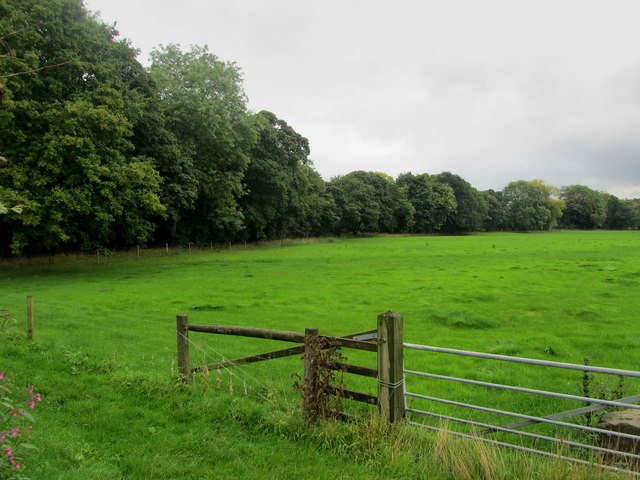 Pasture beside the River Crimple