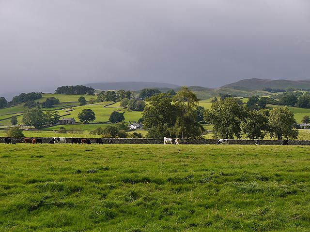 Fields by Bomby Farm