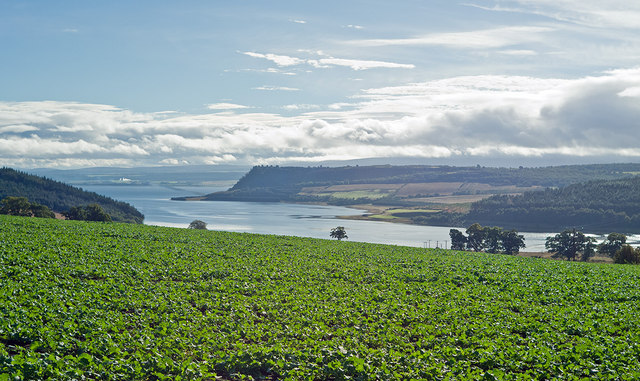 Autumn sown rape above Munlochy Bay
