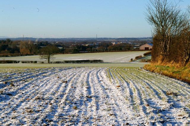 Snowy Furrows