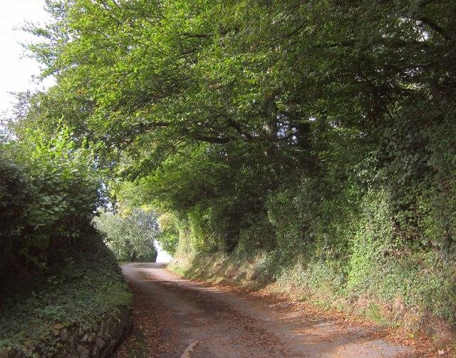 Lane to Newhouse Barton