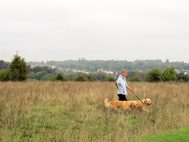 Dog-walking on Farthing Downs