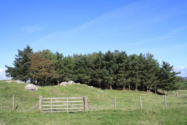 Brighouse plantation