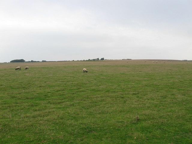 Shepherds Green (1)