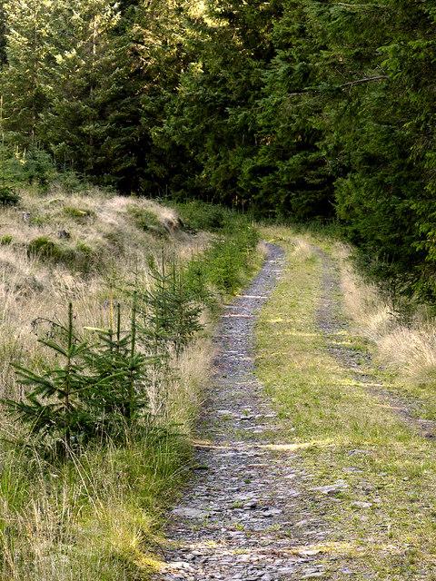 Forestry road in Coed Nantyrhwch, Powys