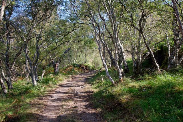 Track through the woodland