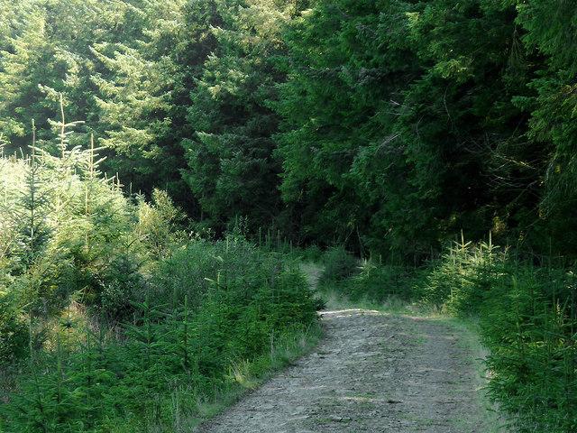 Coed Nantyrhwch, Powys