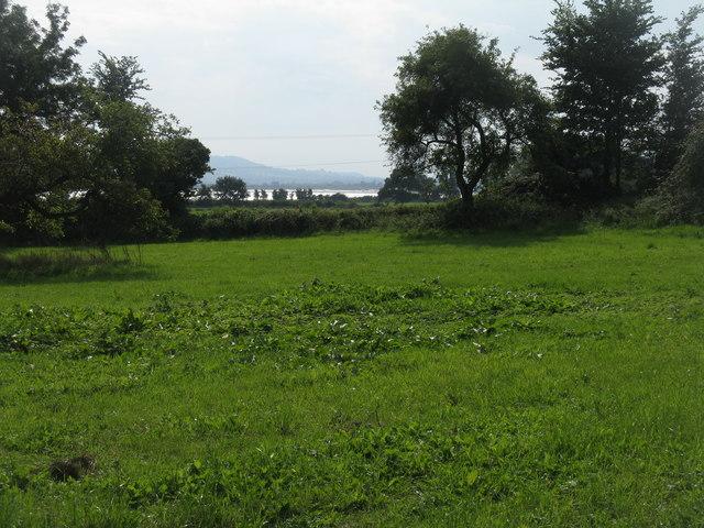 Fields near Ripple House
