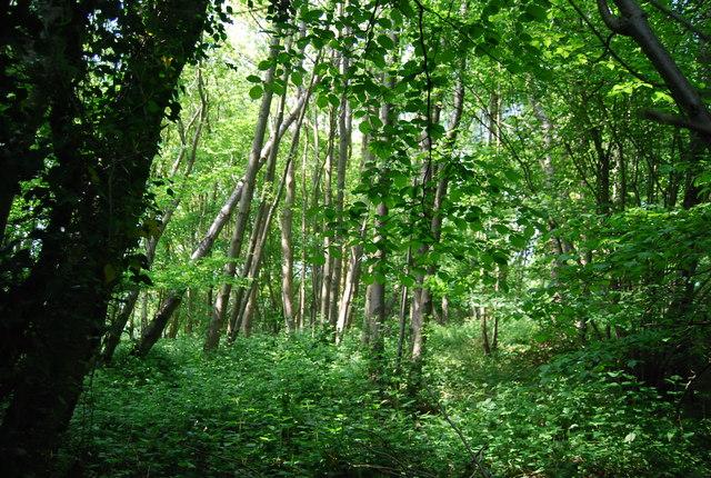 Woodland near Bradley Mill