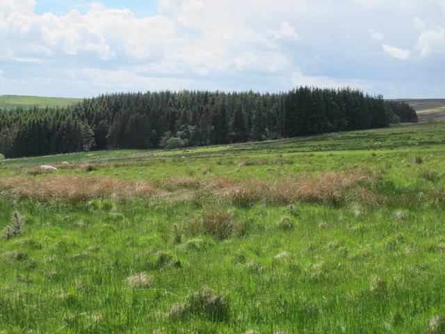 Moorland north of Combs Wood